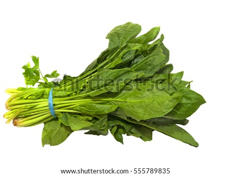 Fresh bunch of healthy spinach on a white background