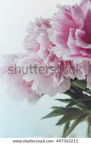 Fresh bunch of pink peonies roses flowers, green leaf in glass vase on the window sill, white background. Summer time concept. Still life, rustic style. Fresh floral, home decor. - stock photo