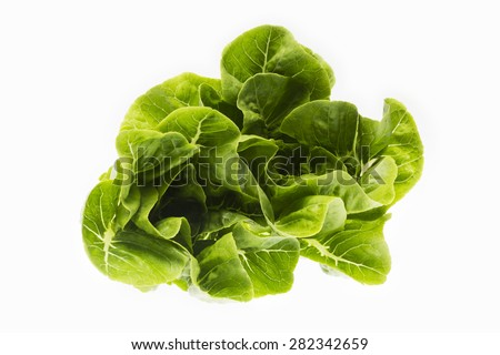fresh butter head lettuce isolated on white background - stock photo