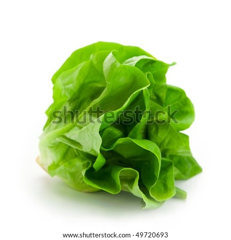 Fresh butterhead salad lettuce (also known as Boston, Bibb, Buttercrunch, and Tom Thumb, Arctic King) isolated on white - stock photo