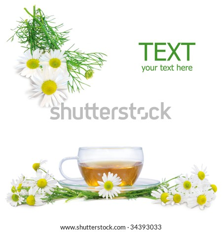 fresh camomile flowers and camomile herbal tea isolated on white square background - stock photo