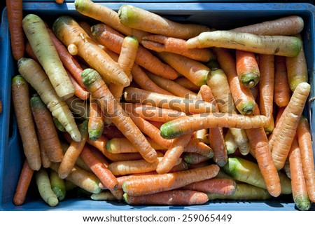 Fresh carrots for sale on farmers market - stock photo