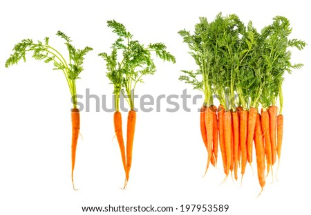 fresh carrots with green leaves isolated on white background. vegetable. food - stock photo