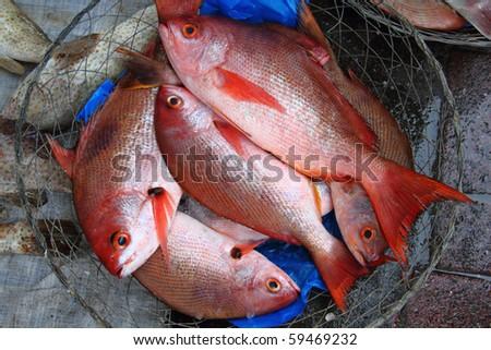 Fresh catch fish - stock photo