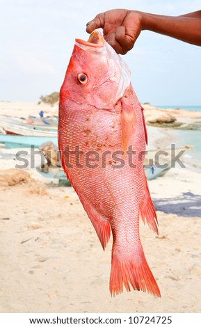 Fresh catch - red snapper - stock photo