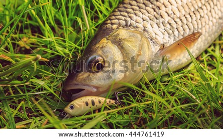 fresh caught fish with bait on the grass close up. small depth of field - stock photo