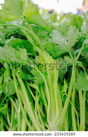 fresh celely in market - stock photo