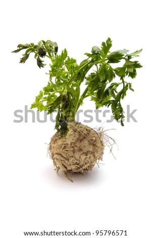 fresh celery with root - stock photo