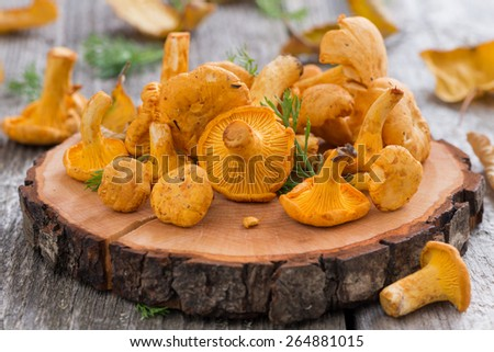 fresh chanterelle mushrooms on a wooden background, close-up - stock photo