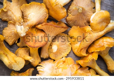 Fresh Chanterelle mushrooms on a wooden table - stock photo