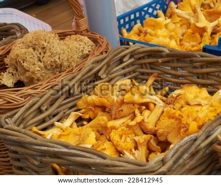 Fresh chanterelles and Cauliflower mushroom exposed in baskets on the market        - stock photo