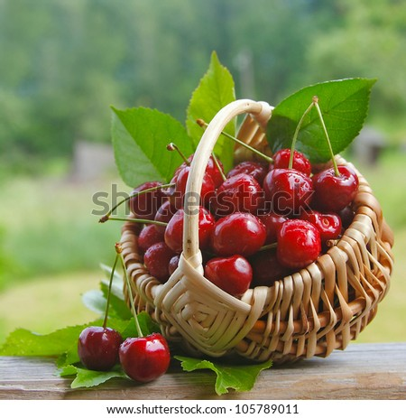 fresh cherries in a wicker basket - stock photo
