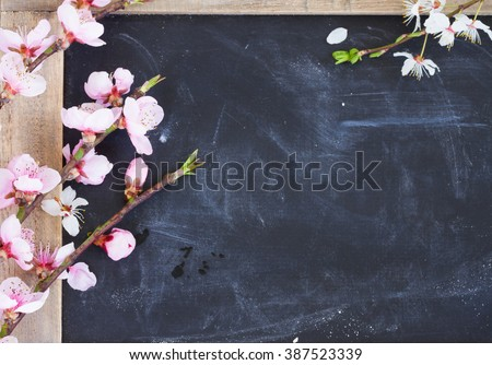 fresh cherry twigs with pink  blooming  flowers  frame on blak board background with copy space - stock photo