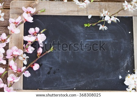 fresh cherry twigs with pink  blooming  flowers   on blak board background with copy space - stock photo