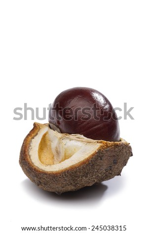 Fresh chestnut in its husk which has been cut open to reveal the texture and structure and seed compartments, on white with copyspace - stock photo