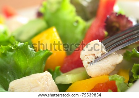 Fresh chicken salad with lettuce, red bell pepper, mango and cucumber with a piece of chicken meat on fork (Very Shallow Depth of Field, Focus on the front of the meat that is on the fork) - stock photo