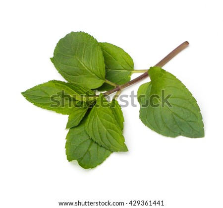 Fresh Chocolate Mint (Mentha piperita) leaves on a white background - stock photo