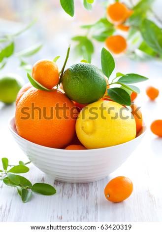 fresh citrus fruits - stock photo