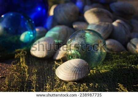 Fresh clams on netting with antique glass fishing floats in sunlight - stock photo
