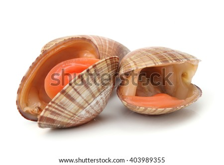 fresh clams on white background