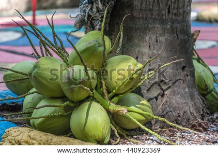 Fresh coconut under the coconut tree.Juice,drink concept