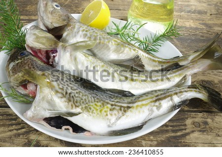 fresh cod fishes on a white plate - stock photo