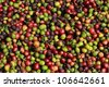 fresh coffee beans - stock photo