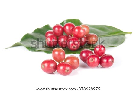Fresh coffee beans,Coffee leaves  isolated on white background.