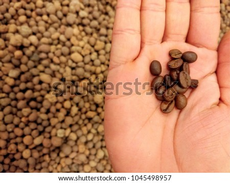 Fresh coffee beans in hand, on a brown background