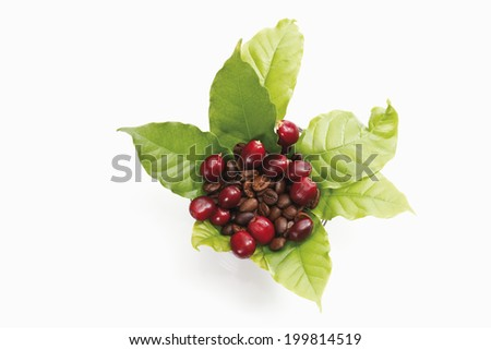 Fresh coffee beans with leaves - stock photo