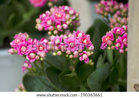 Fresh colorful flowers in pots in the garden. - stock photo