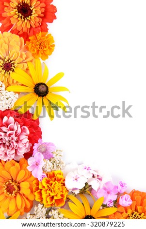 Fresh colorful flowers isolated on white