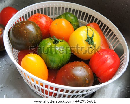 Fresh colorful tomatoes with water drops - stock photo