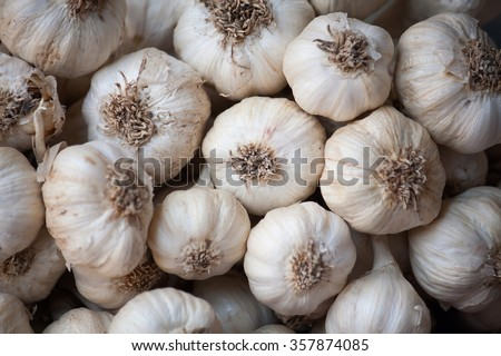 Fresh Common Garlic close up