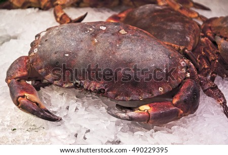 fresh cooked dungeness crab on ice for sale in a fish market