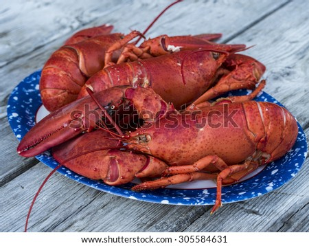 Fresh cooked lobsters ready to eat. - stock photo