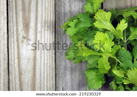 fresh coriander on wooden background
