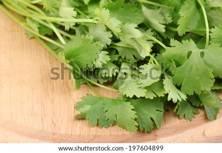 fresh coriander or cilantro on wooden board isolated on white - stock photo