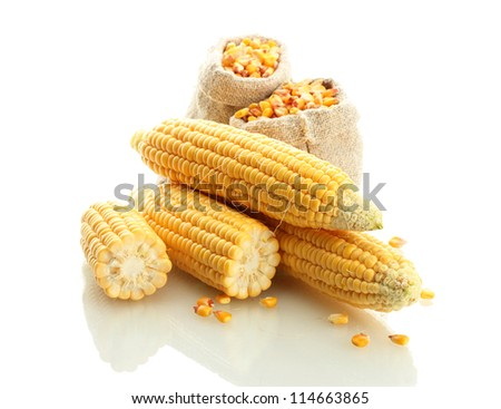 fresh corn and bags with dry corn, isolated on white - stock photo