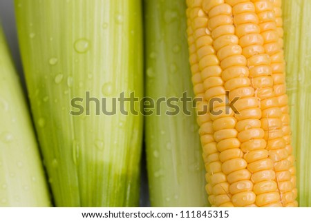 Fresh corn cob - stock photo