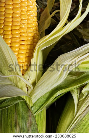 Fresh corn cob with leaves ready to be cooked closeup - stock photo