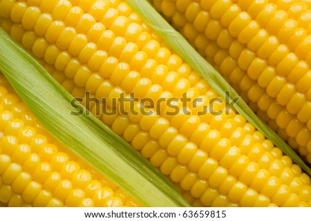 Fresh corn cobs - stock photo