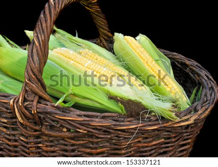 Fresh corn cobs in a basket - stock photo