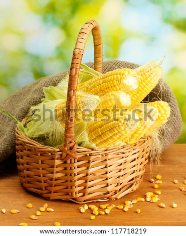 fresh corn in basket, on wooden table, on green background - stock photo
