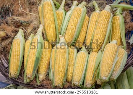 Fresh corn in market - stock photo