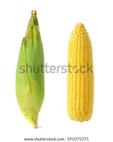 fresh corn isolated on white background, Product of Thailand - stock photo