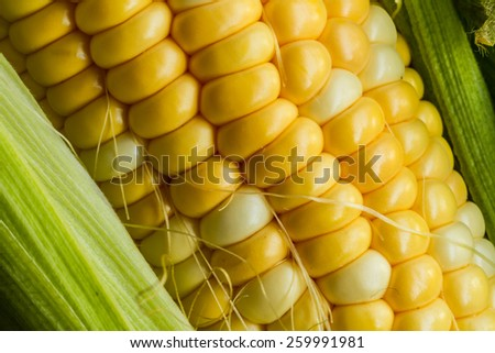 Fresh corn on a cob with husk - stock photo