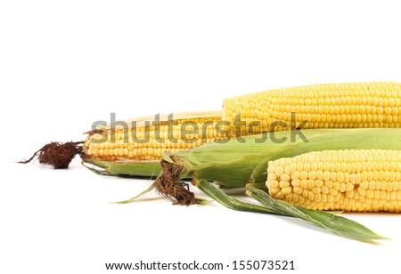 Fresh corn on cob. Isolated on a white background - stock photo