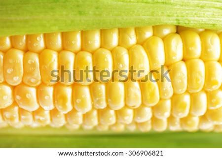 Fresh corn on cob with drops, closeup - stock photo