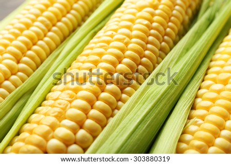 Fresh corn on cobs, closeup - stock photo